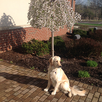 Morgan the dog is the unofficial greeter of DOY Federal Credit Union